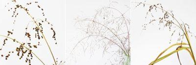 3 grasses