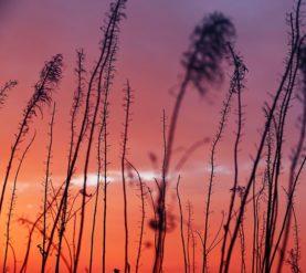SUNSETS AND SEADHEADS 3