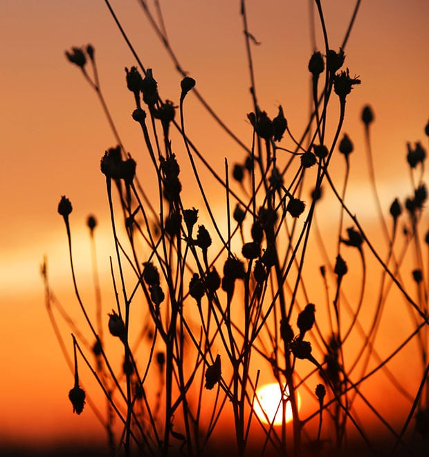 SUNSETS AND SEEDHEADS 1