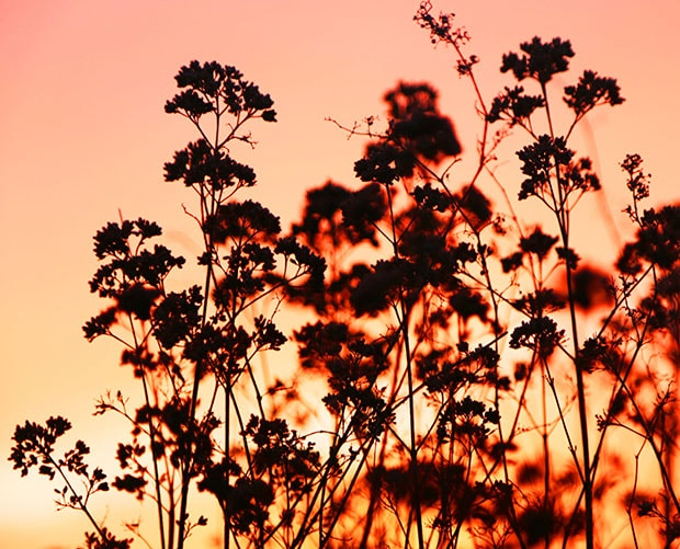 SUNSETS AND SEEDHEADS 2