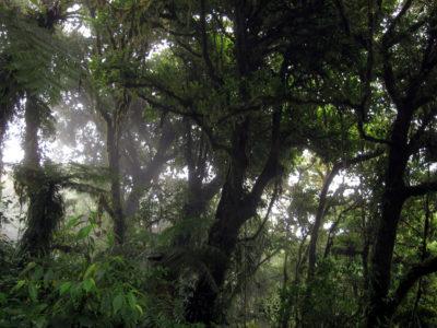 Monteverde_bosque