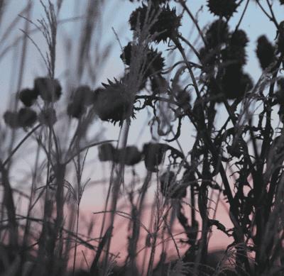 Screen Shot 2020-02-25 at 2.42.12 PM
